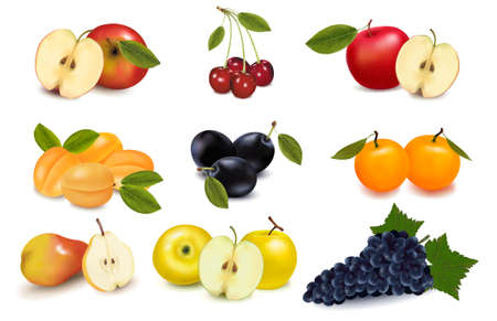 Group of different sorts of fruit. Vector. Stock Vector - 9720872