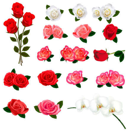 pink rose petals: Set of a beautiful flowers on a white background. Vector.