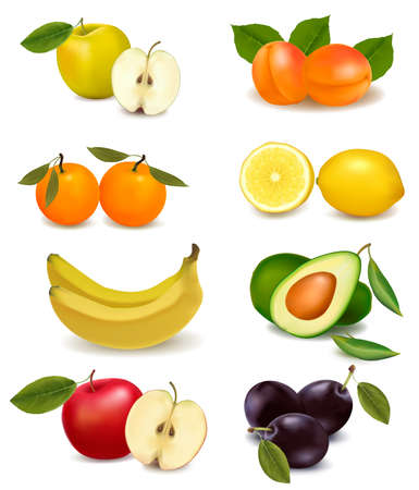 avocado: Group with different sorts of fruit. Vector.  Illustration