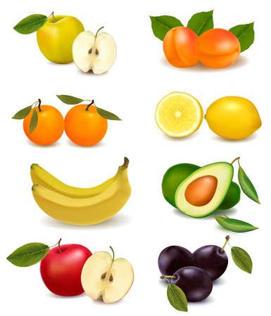 avocado: Gruppo con diversi tipi di frutta. Vector.