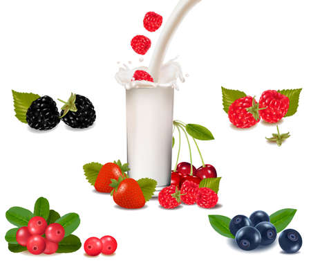 Raspberry and strawberry falling into the milk splash. Vector illustration.  Vector