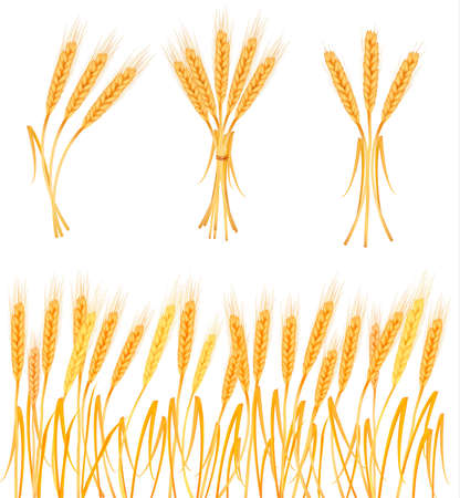 rye bread: Ripe yellow wheat ears, agricultural vector illustration