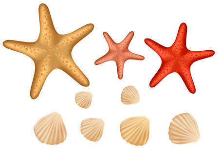 cockle: Seashell collection isolated on white background. Vector