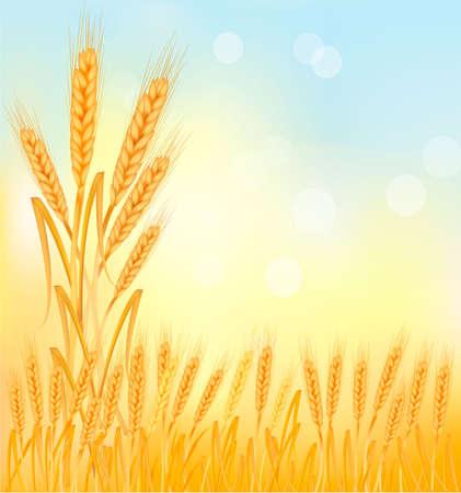 thresh: Fondo con orejas de trigo amarillo madura. Vectores