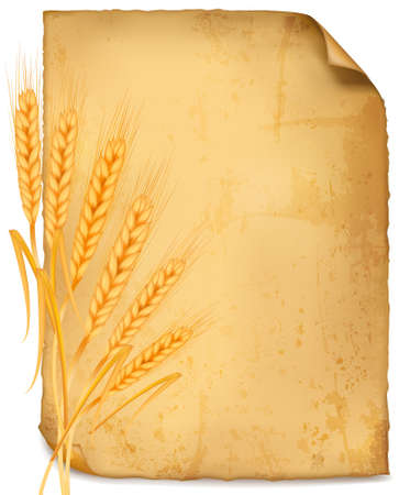 Background with ripe yellow wheat ears, agricultural vector illustration  Vector