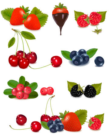 Group of berries and cherries.   Vector
