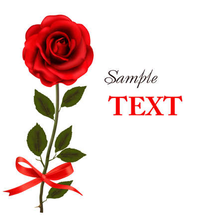 beautiful red rose on a white background.  Vector