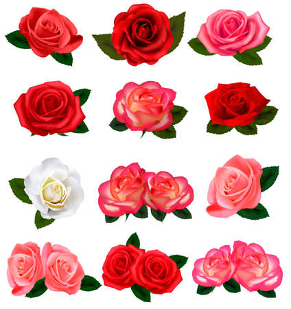 rose garden: Set of a beautiful roses on a white background. Vector.