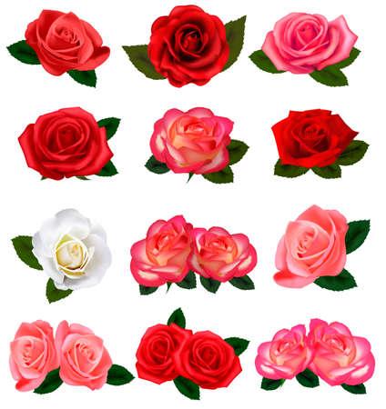 love rose: Un conjunto de hermosas rosas sobre un fondo blanco. Vector. Vectores
