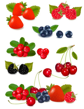 foxberry: Big group of fresh berries. Photo-realistic vector illustration.