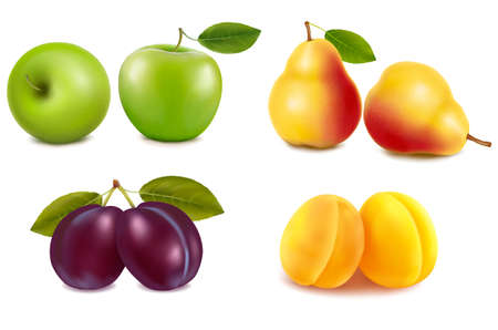 canned drink: Group with different sorts of fruit. Vector.