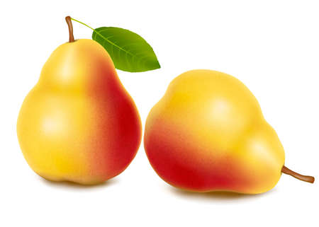 Two fresh pears isolated on a white background. Vector.