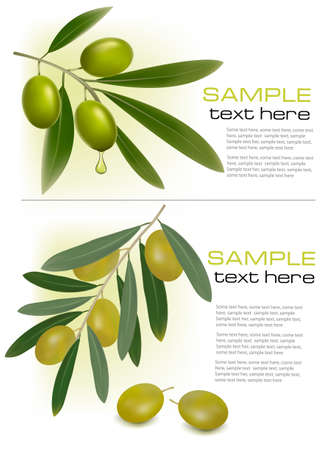 Background with green olives. illustration. Vector
