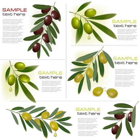 olivo arbol: Conjunto de fondos con aceitunas verdes y negro. Ilustración vectorial Vectores