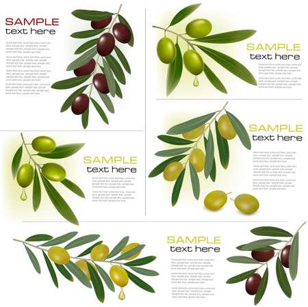 d�bord�: Ensemble de milieux avec des olives vertes et noires. Vector illustration Illustration