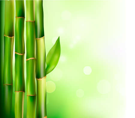 feng shui: Bamboo background.  Vector illustration.