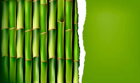 Bamboo background with ripped paper. Vector illustration.  Vector