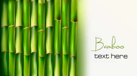 shoots: Bamboo background. Vector illustration.  Illustration