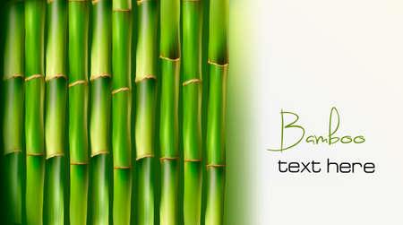 organic spa: Bamboo background. Vector illustration.  Illustration