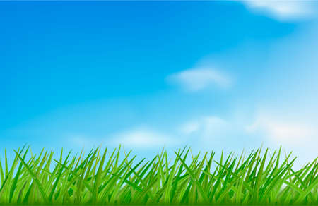Green grass against the sky background. Vector illustration.  Vector