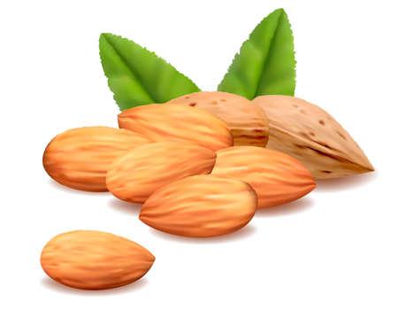 almonds: Almond.Vector