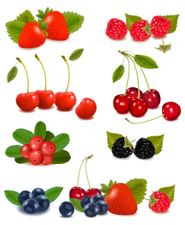 Big group of fresh berries  Vector  Vector