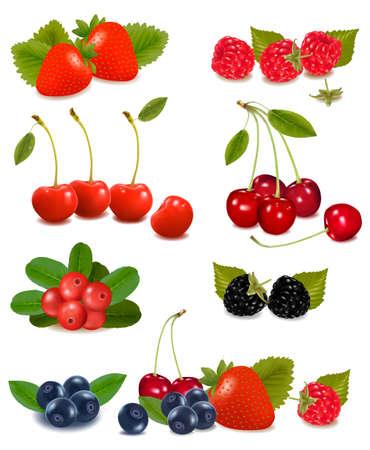 blackberries: Big group of fresh berries  Vector