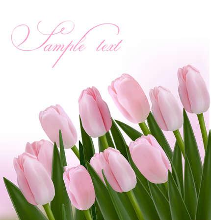 red tulip: Flower design border isolated on white  Vector   Illustration