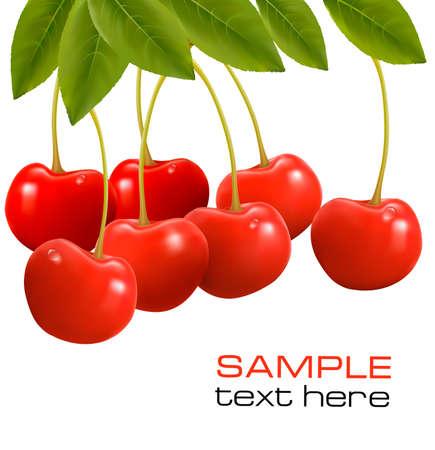 sour cherry: Bunch of fresh, juicy, ripe cherries  Vector illustration
