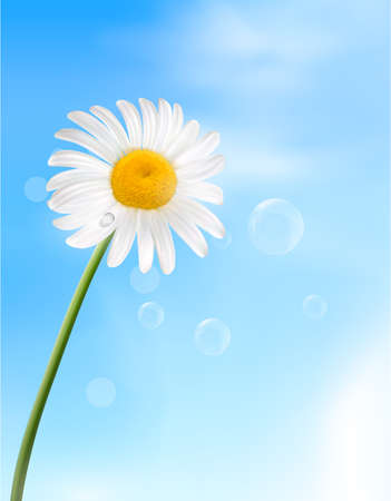 macro flower: chamomile flower  Vector