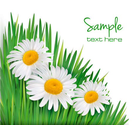 chamomile flower: Easter background  Daisy flowers in green grass  Vector illustration   Illustration