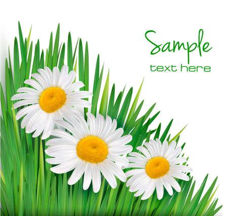 kamille: Ostern Hintergrund Daisy Blumen im gr�nen Gras Vektor-Illustration