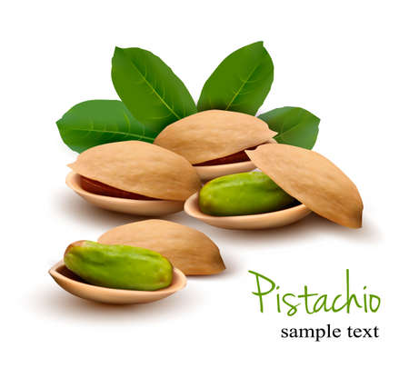 pistachio: Pistachio with leaves  Vector