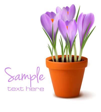 saffron: Fresh spring flowers  Easter background  Vector illustration