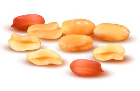 peanut: Peanuts  Vector illustration