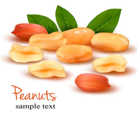 Peanuts mit Blättern Vector illustration