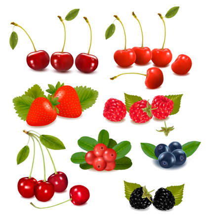 nutrients: Big group of fresh berries  Vector illustration  Illustration