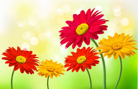 gerber flowers: Background with beautiful gerber flowers  Vector  Illustration