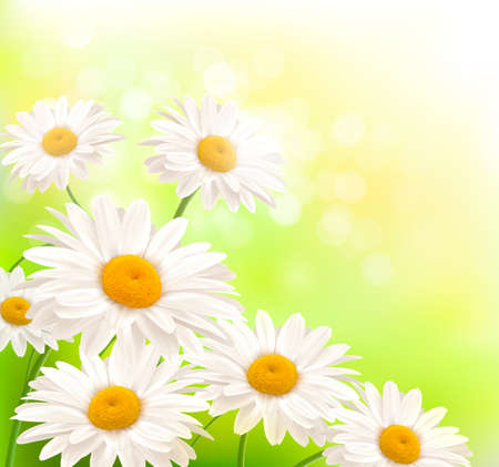 margerite: Beautiful background with grass and daisies  Vector  Illustration