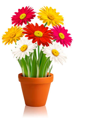 gerber: Fresh spring color flowers  Vector illustration  Illustration