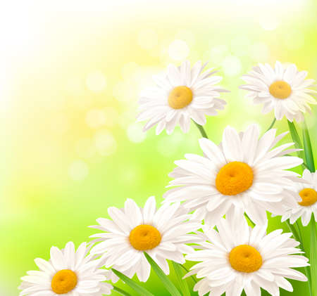 chamomile flower: Beautiful background with grass and daisies  Vector  Illustration