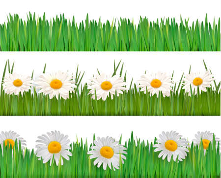 Fresh spring and daisy borders  Vector Vector