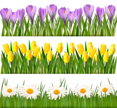 Fresh spring and flower borders  Vector Vector