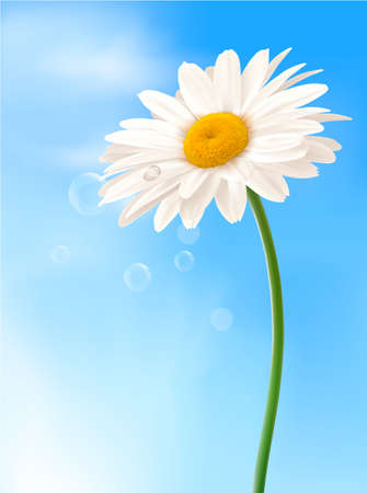 white daisy: Beautiful white daisy in front of the blue sky  Vector