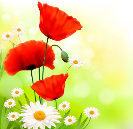 Spring background with red poppy and daisy  Vector Vector