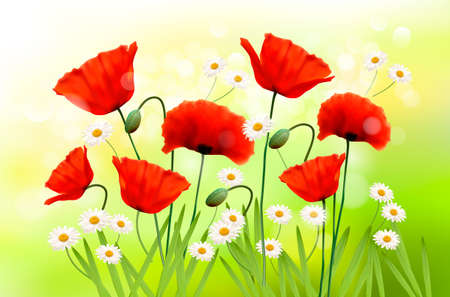 greenfield: Spring background with red poppy and daisy  Vector Illustration