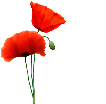 greenfield: Spring background with red poppy  Vector