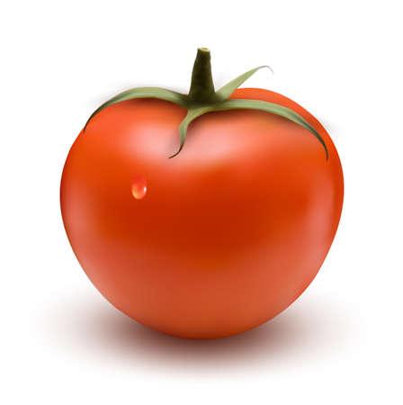 salat: fresh tomato with drop  Vector