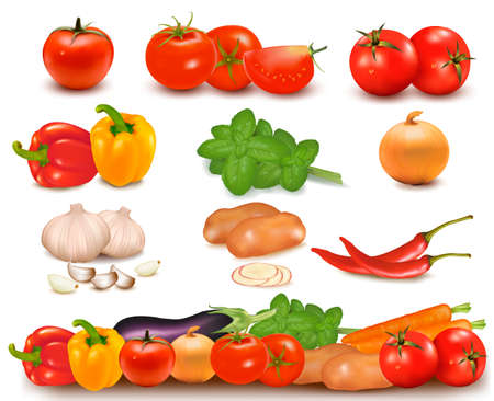 cucumber salad: The big colorful collection of vegetables and vegetable design border  Vector  Illustration