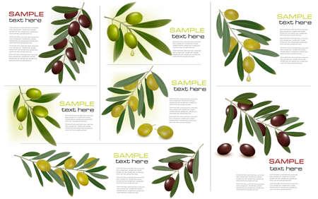 rama de olivo: Conjunto de fondos con aceitunas verdes y negro. Ilustraci�n del vector. Vectores